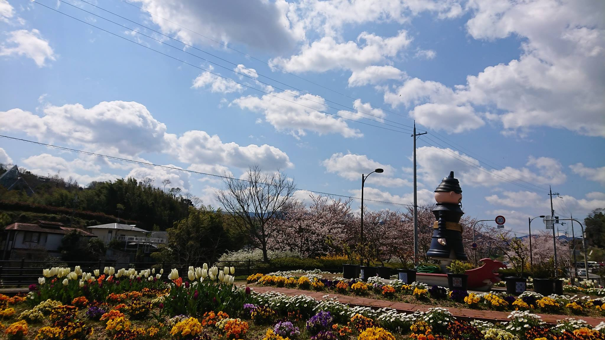 奥河内くろまろの郷の桜