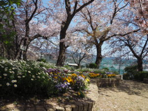 楠ケ丘公園は花いっぱい
